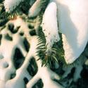 The Pagan Winter Solstice